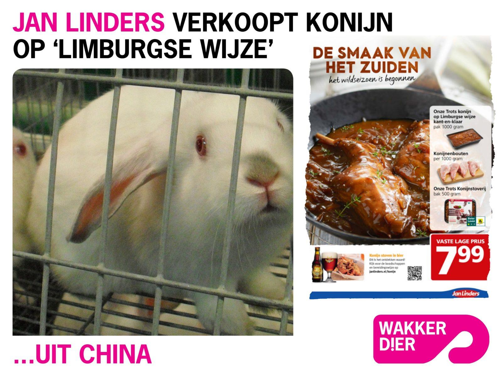 Jan Linders konijn uit china