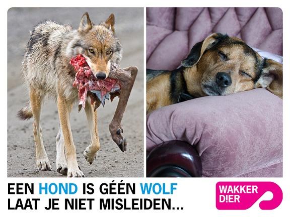 een hond is geen wolf