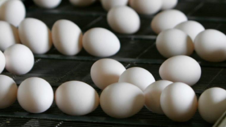 beeld eieren lopende band