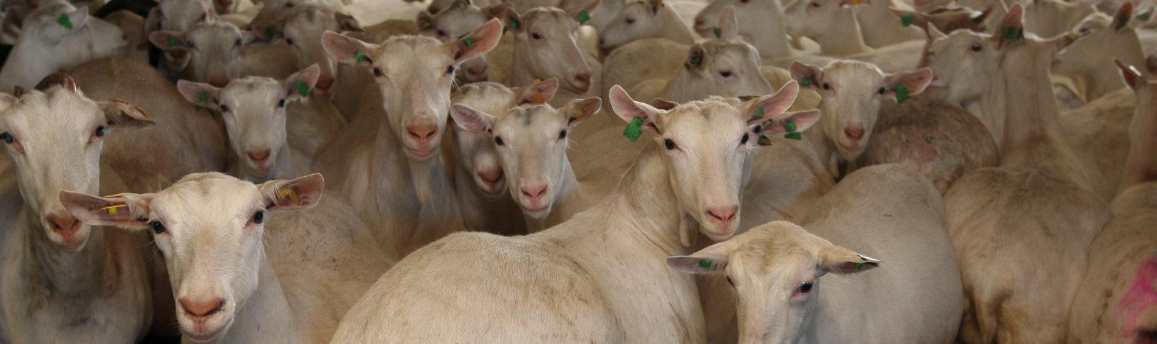 header-geiten