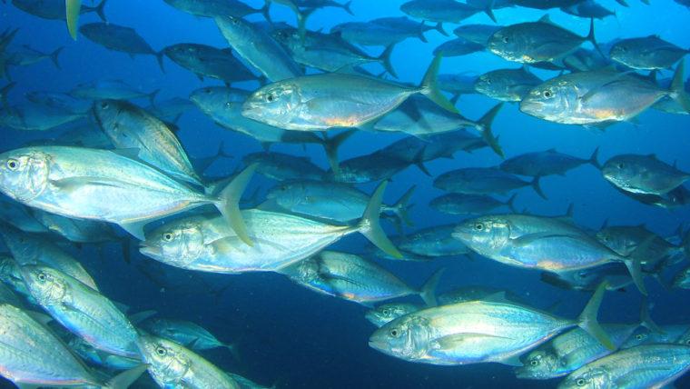 beeld school tonijnen