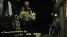 Beeld: meerdere kippen worden op hun kop aan hun poten vastgehouden